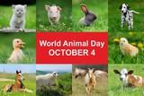 World animal day - 173639978