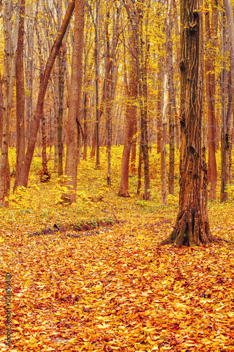 Foto op Canvas Baksteen Photo of orange autumn forest with leaves