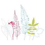 Floral vector botanical illustration with different hand drawn leaves, wild flowers and plants - 173655990