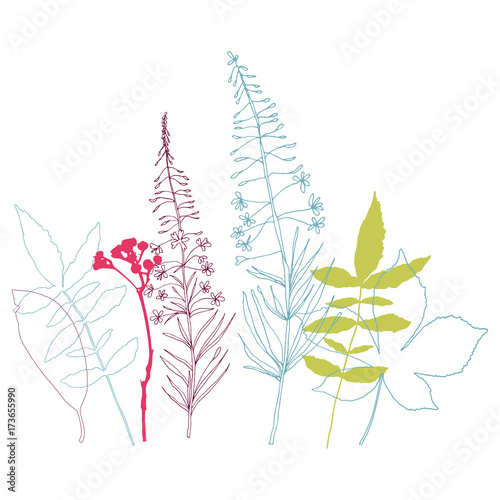 Floral vector botanical illustration with different hand drawn leaves, wild flowers and plants