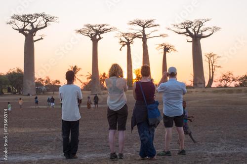 Fotobehang Baobab baobab tourisme Madagascar