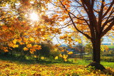 Colorful tree and blue sky in the autumn park - 173687174