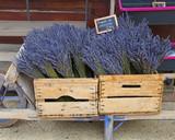 Ein schubkarren voller Lavendel