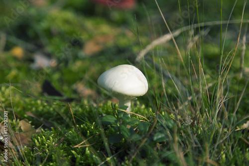 Papiers peints Herbe Mushroom
