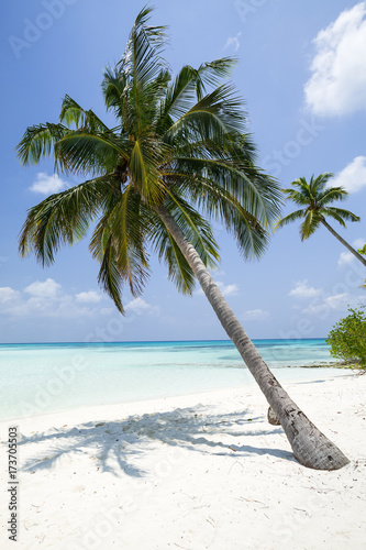Obraz na Szkle Coconut palm tree on Maldives island