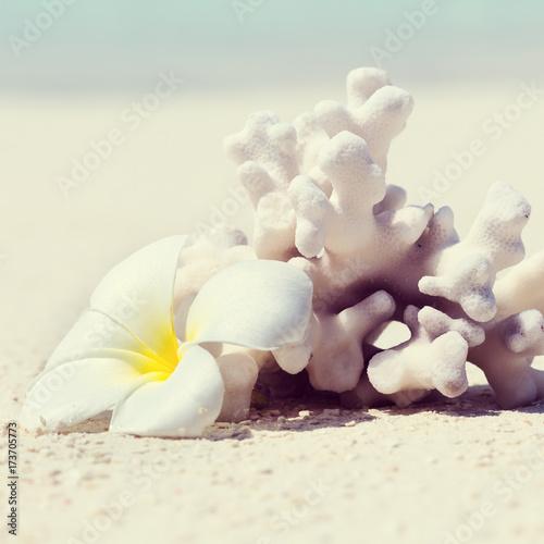 Fotobehang Plumeria Plumeria flower and coral on perfect Maldives beach