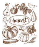 Ink hand drawn set of vegetables and fruits - cherry tomatoes, zucchini, pumpkin, patisson, pear, apple. Autumn harvest elements collection with brush calligraphy style lettering. Vector illustration. - 173706908