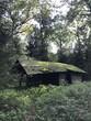 alte Hütte im Wald