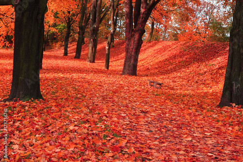 Fotobehang Koraal red autumn park