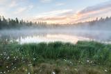 Foggy morning at forest pond landscape Finland - 173748172