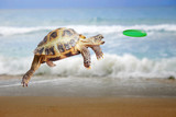 Turtle jumps and catches the frisbee - 173751357