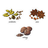 vector flat cartoon sketch hand drawn Spices, seasoning, flavorings and kitchen herbs set. Star anise with seeds, nutmeg and cardamom. Isolated illustration on a white background - 173757927