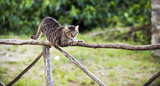 A cat on a fence