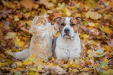 Funny cat playing with a dog in autumn - 173771131