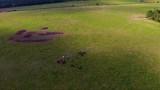 troupeau de chevaux en vue aérienne  - 173789575
