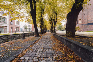sidewalk in city during autumn