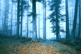 Magic blue foggy fairytale landscape with autumn colored leaves on forest floor.