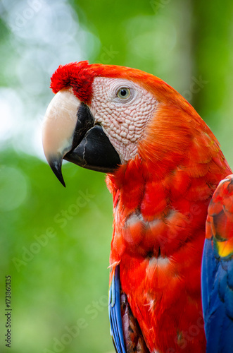 Aluminium Papegaai red macaw portrait