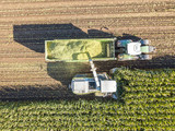 Aerial view of a harvest - 173870968