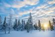 Snowy landscape at sunset, frozen trees in winter in Saariselka, Lapland, Finland