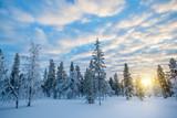 Snowy landscape at sunset, frozen trees in winter in Saariselka, Lapland, Finland - 173927335