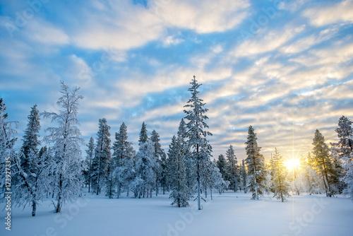 Fotobehang Landschappen Snowy landscape at sunset, frozen trees in winter in Saariselka, Lapland, Finland