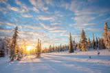 Snowy landscape at sunset, frozen trees in winter in Saariselka, Lapland, Finland - 173928391