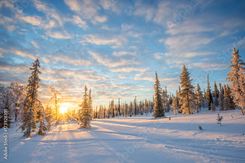 Wall mural Snowy landscape at sunset, frozen trees in winter in Saariselka, Lapland, Finland