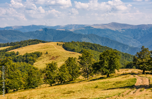 Poster Honing dirt road through beech forest on alpine meadow. lovely landscape with beech forest on hills and gorgeous Svydovets mountain ridge in a distance
