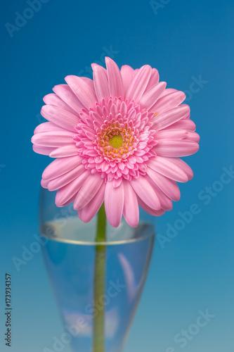 Aluminium Gerbera ガーベラの花