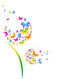 butterflies, dandelion, isolated on a white