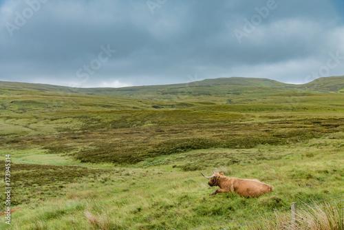 Fotobehang Pistache cows pastures in Scotland grasslands