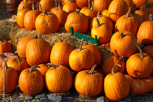 Aluminium Rood traf. Photo of beautiful pumpkins at outdoor farmer local market in sunny autumn day.