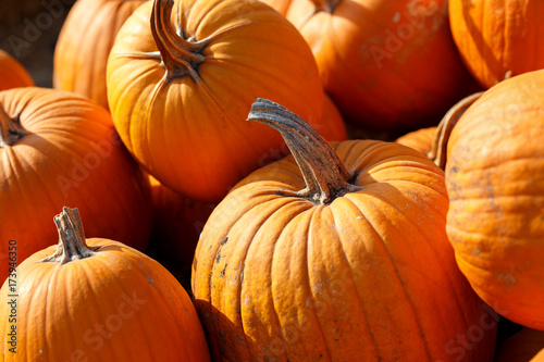 Poster Rood traf. Photo of beautiful pumpkins at outdoor farmer local market in sunny autumn day.