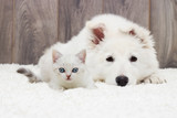 kitten and puppy - 173955772