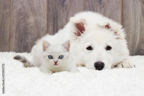 Fototapeta kitten and puppy