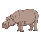 Color illustration of a hippopotamus. Isolated vector object on white background. - 173985380