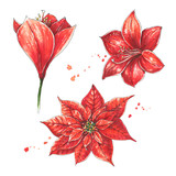 Vintage hand drawn set of red flowers. Christmas decoration plants