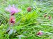 Flowers - 173995991