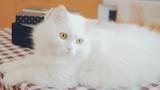 Charming fluffy cat - 174008552