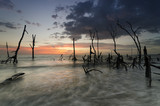 Beautiful and calm beach with dead mangroves during sunset