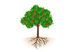 実がついた根っこ付きのりんごの木