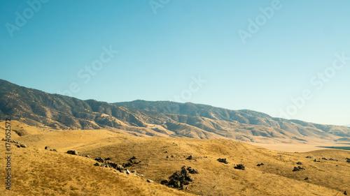 Foto op Plexiglas Honing desert