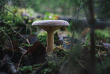 forest mushrooms on nature. - 174053564