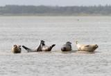 Robben auf kleiner Sandbank - 174087780