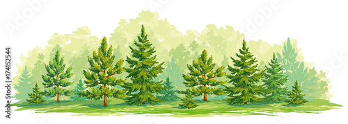 Young forest of pine and fir trees- vector graphic - 174152544