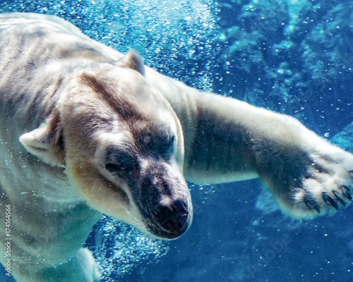 Aluminium Ijsbeer Polar bear underwater