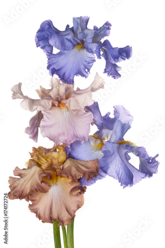 Fotobehang Iris iris flowers isolated