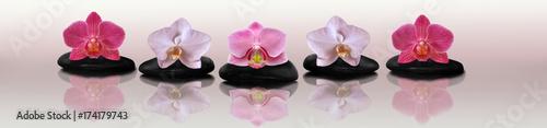 Foto op Canvas Zen Orchid on the rocks