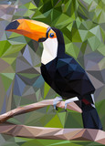 Toucan Low Poly